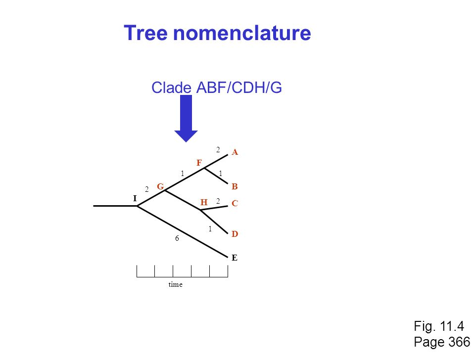 Tree nomenclature Clade ABF/CDH/G Fig. 11.4 Page 366 A F G B I H C D E