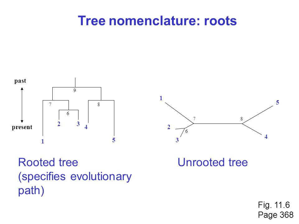 Tree nomenclature: roots