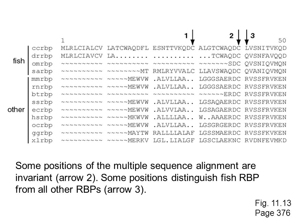 Some positions of the multiple sequence alignment are
