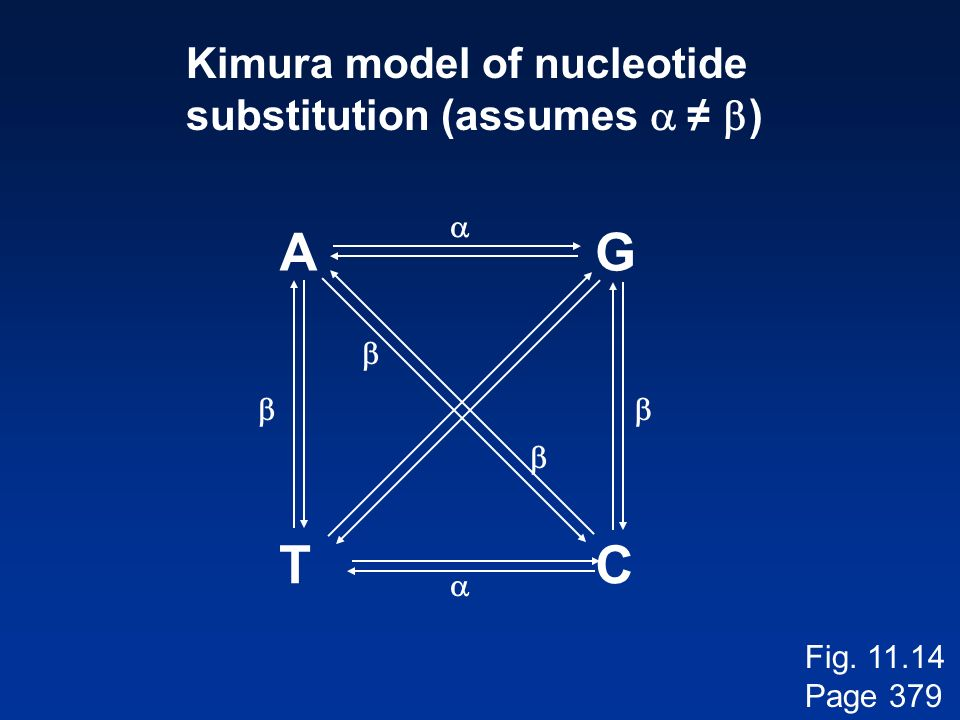 A G T C Kimura model of nucleotide substitution (assumes a ≠ b) a b b