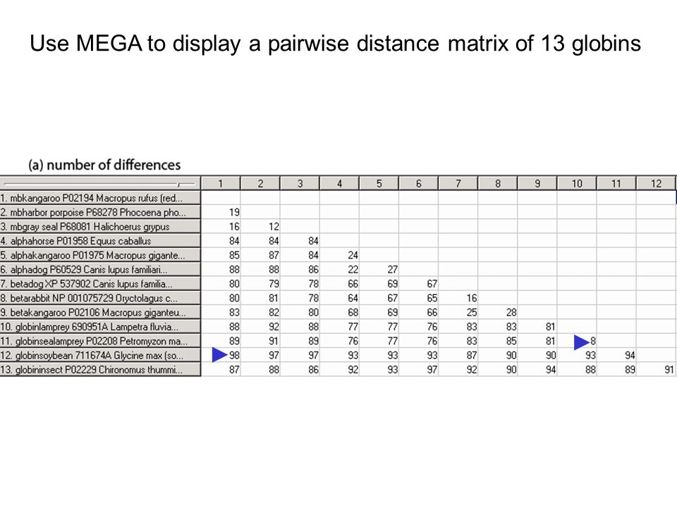 Use MEGA to display a pairwise distance matrix of 13 globins