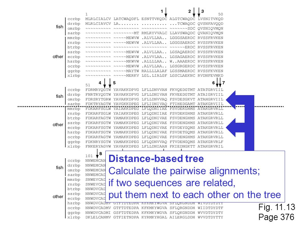 Calculate the pairwise alignments; if two sequences are related,
