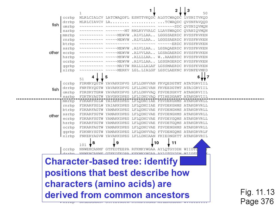 Character-based tree: identify positions that best describe how characters (amino acids) are derived from common ancestors