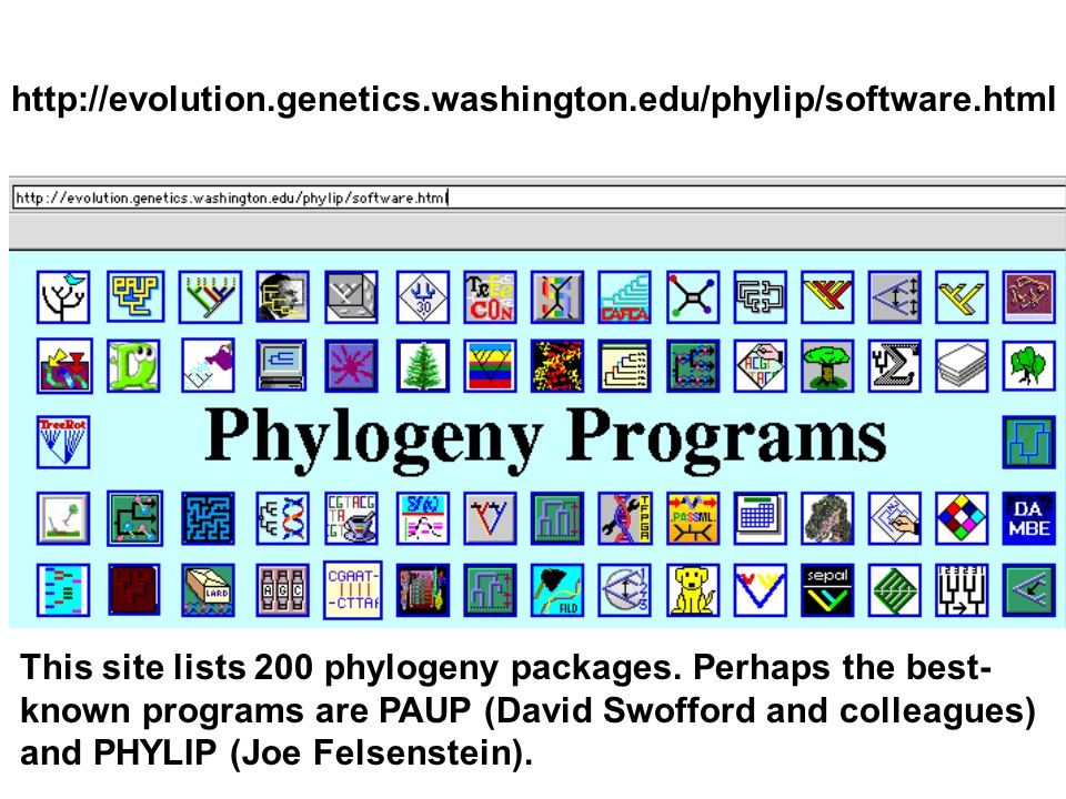 http://evolution.genetics.washington.edu/phylip/software.html This site lists 200 phylogeny packages. Perhaps the best-