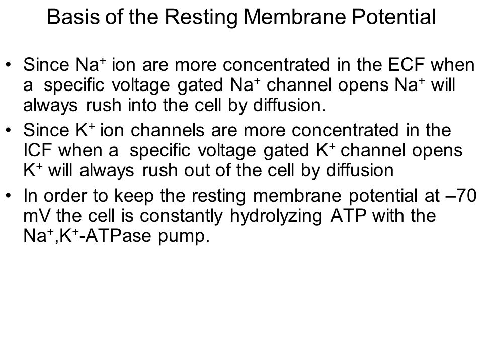 Basis of the Resting Membrane Potential