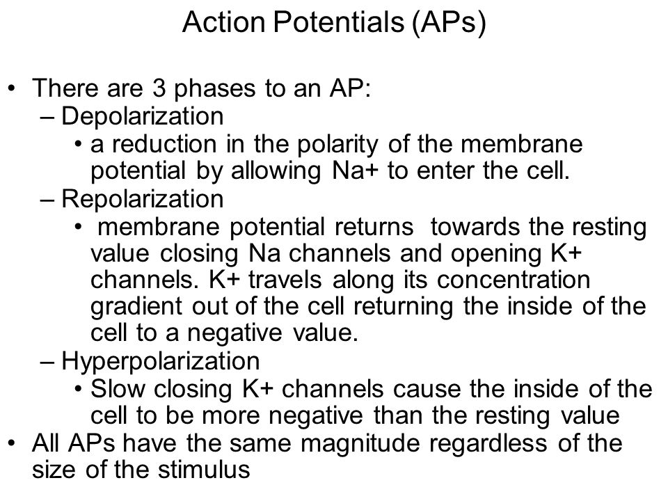 Action Potentials (APs)