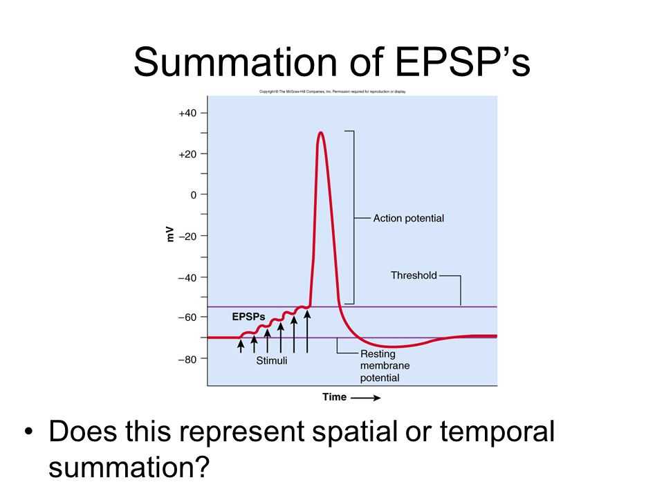 Summation of EPSP's Does this represent spatial or temporal summation