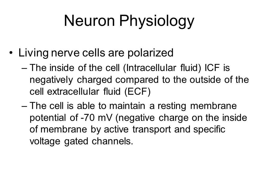 Neuron Physiology Living nerve cells are polarized
