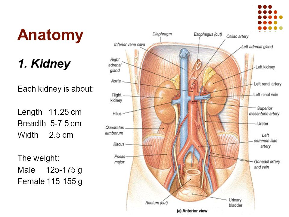 Department of Human Anatomy - ppt video online download