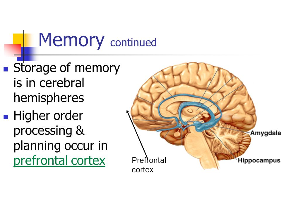 Learning & Memory. - ppt video online download