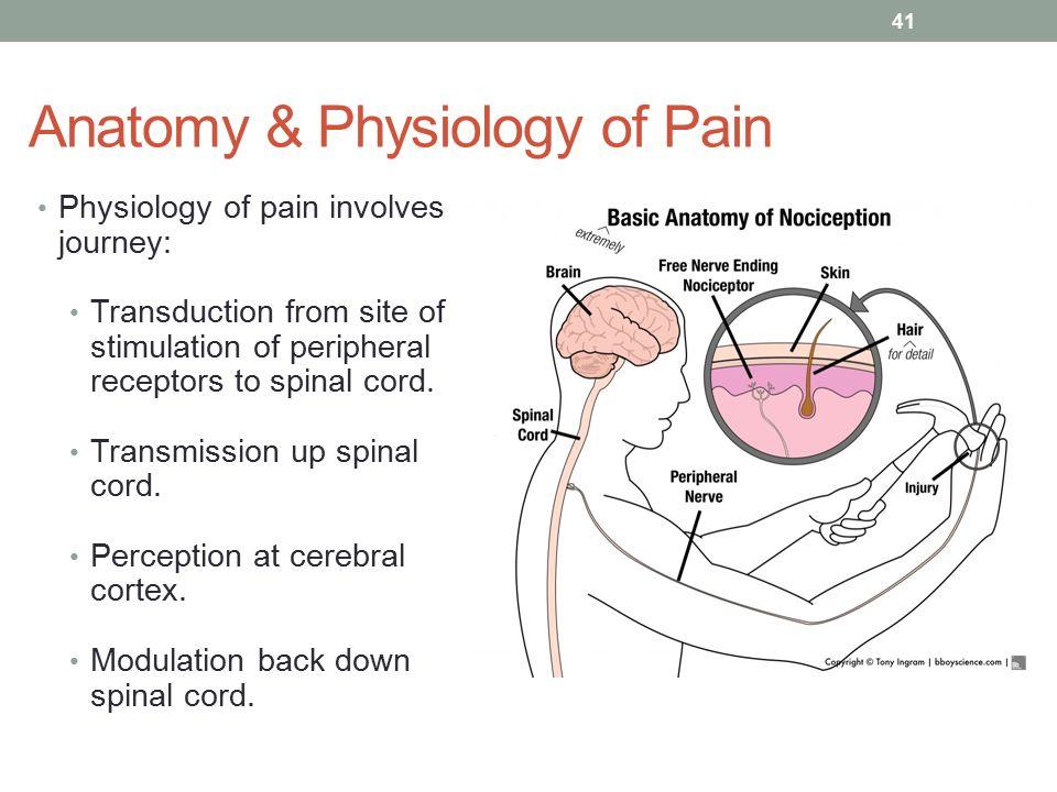 Asombroso Basics Of Anatomy And Physiology Regalo - Anatomía de Las ...