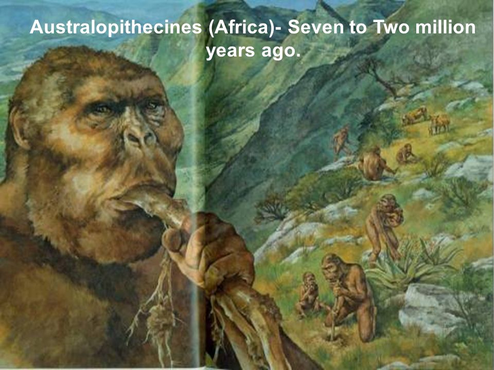 Australopithecines (Africa)- Seven to Two million years ago.