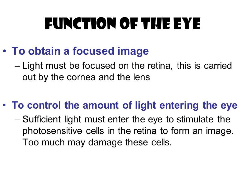 Fantastic Anatomy Of The Eye Ppt Ideas Internal Organs Diagram