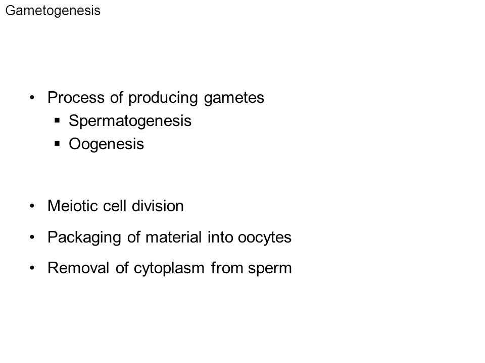 Process of producing gametes Spermatogenesis Oogenesis