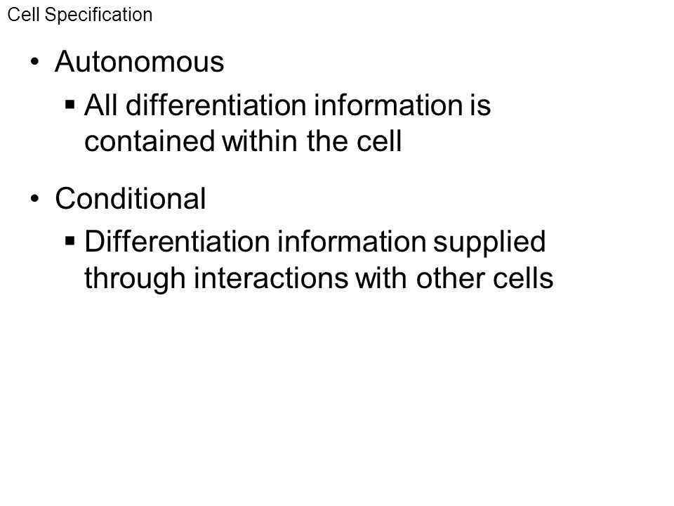 All differentiation information is contained within the cell