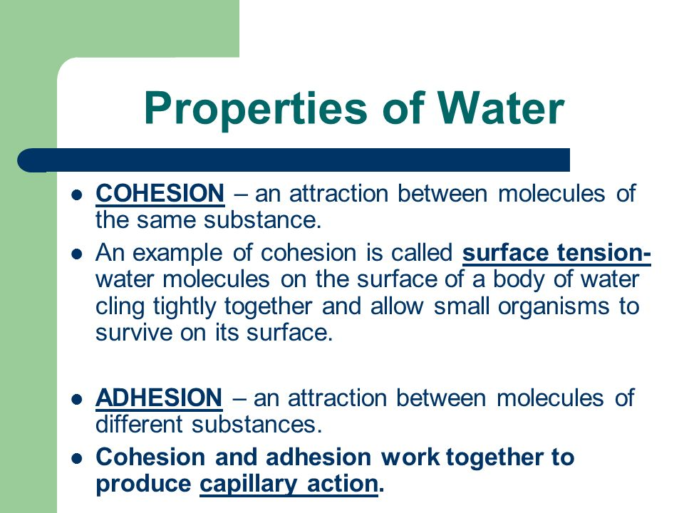 Properties of Water COHESION – an attraction between molecules of the same substance.