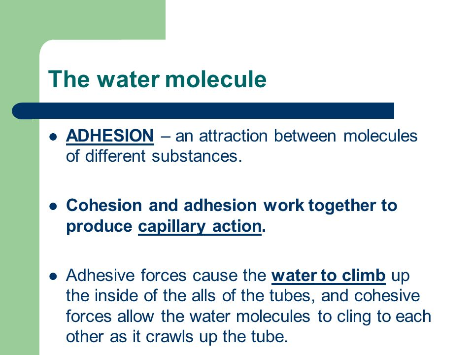 The water molecule ADHESION – an attraction between molecules of different substances.