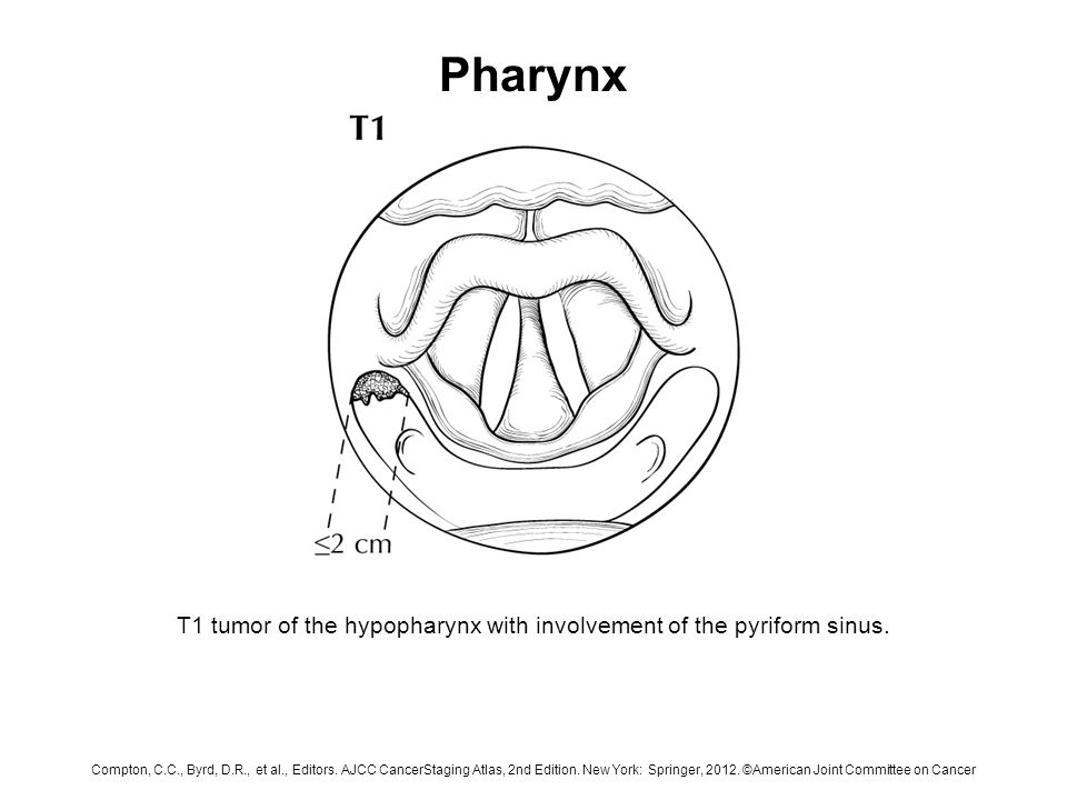 Pharynx Sagittal View Of The Face And Neck Depicting The