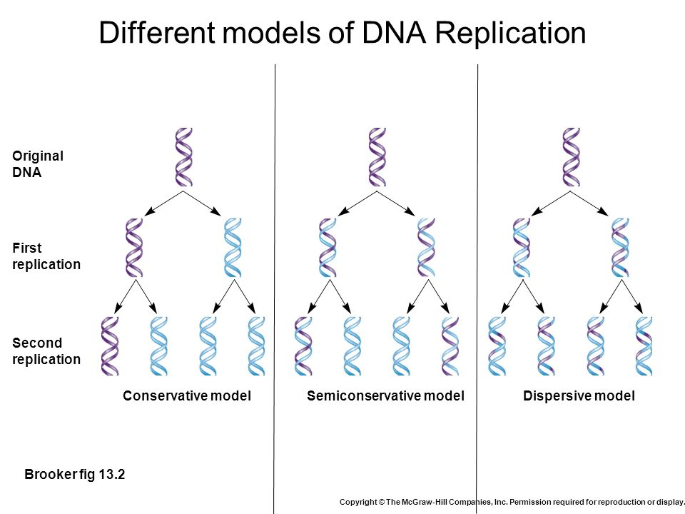 semiconservative mode of dna replication