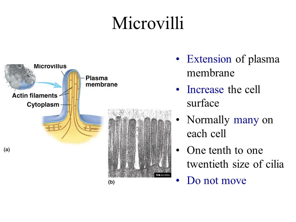 Chapter 3 The Cell II. - ppt video online download