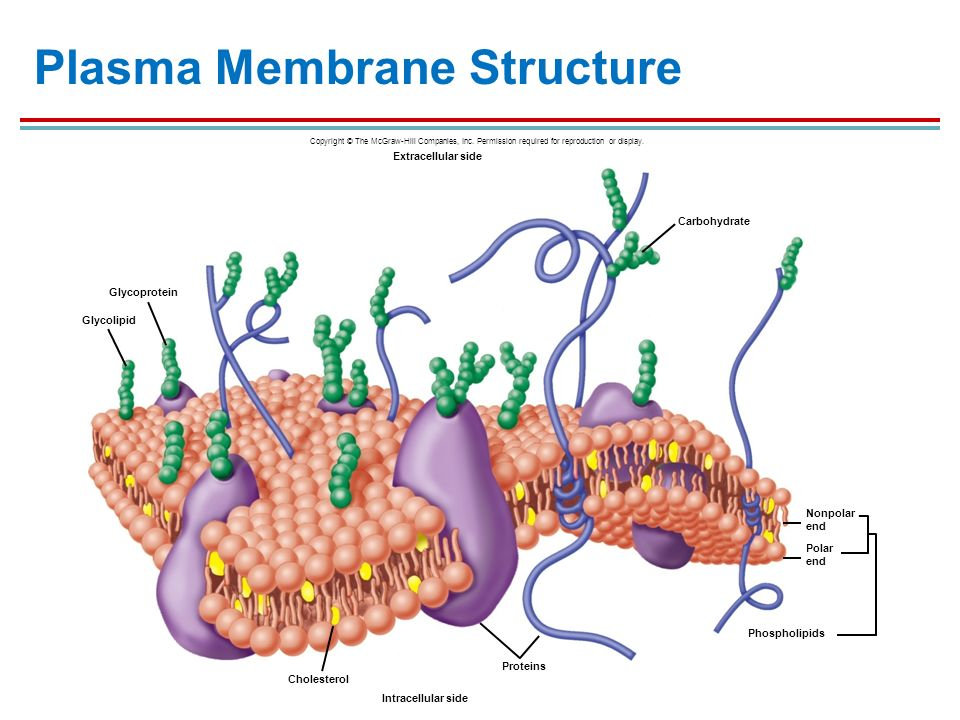 cell structure and genetic control