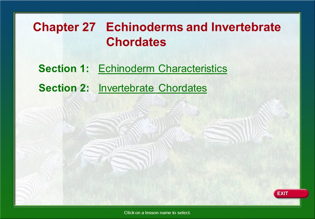 Chapter 27 Echinoderms and Invertebrate