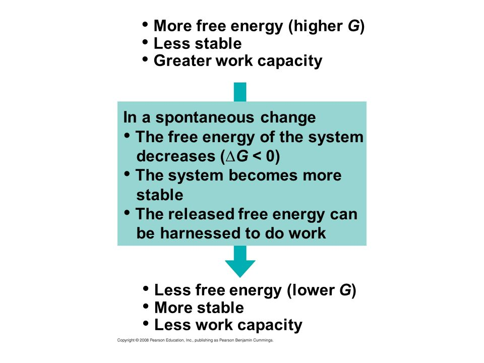 More free energy (higher G) Less stable Greater work capacity