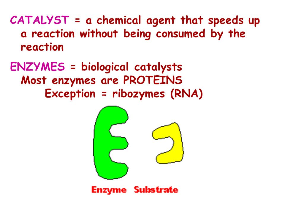 CATALYST = a chemical agent that speeds up a reaction without being consumed by the reaction ENZYMES = biological catalysts Most enzymes are PROTEINS Exception = ribozymes (RNA)