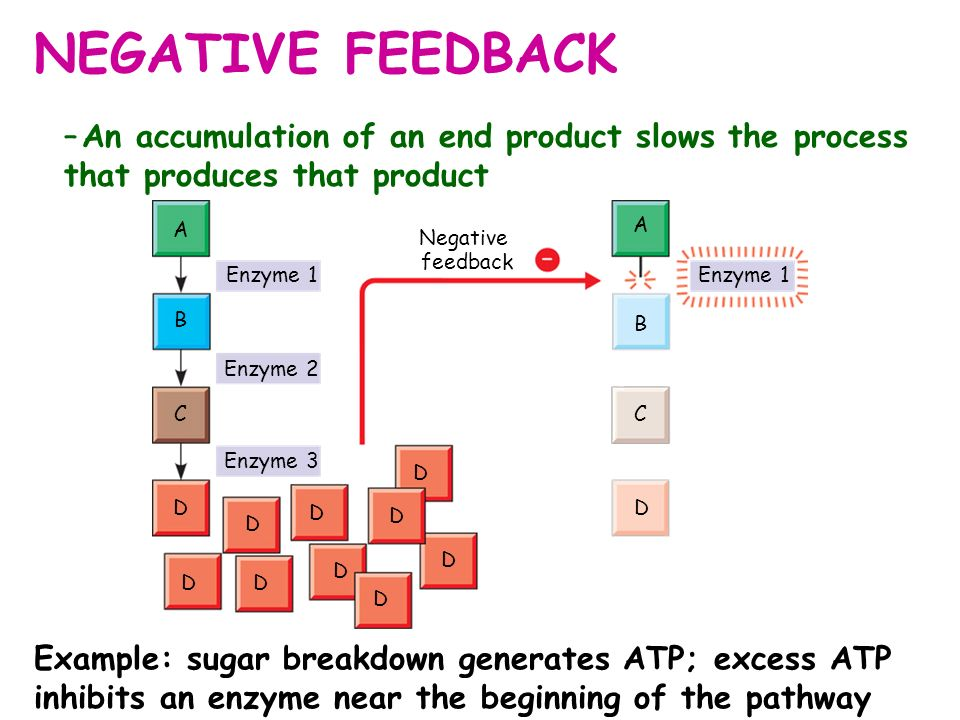 NEGATIVE FEEDBACK An accumulation of an end product slows the process that produces that product. B.
