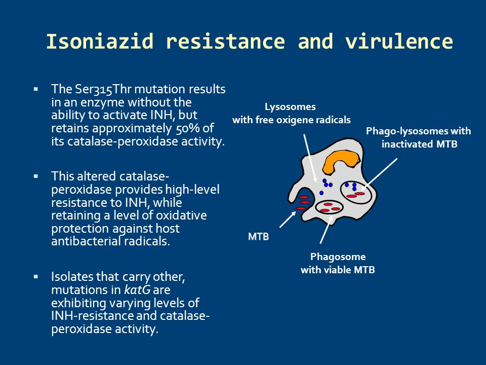 Isoniazid resistance and virulence