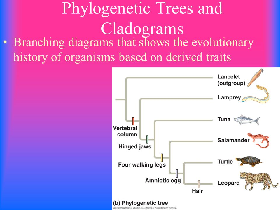 Grouping Organisms Based On Similarities Ppt Video Online Download