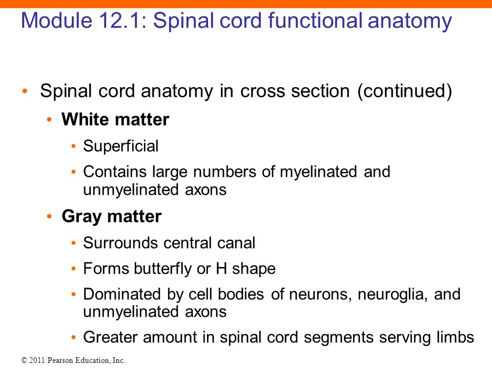 12 The Spinal Cord, Spinal Nerves, and Spinal Reflexes. - ppt video ...