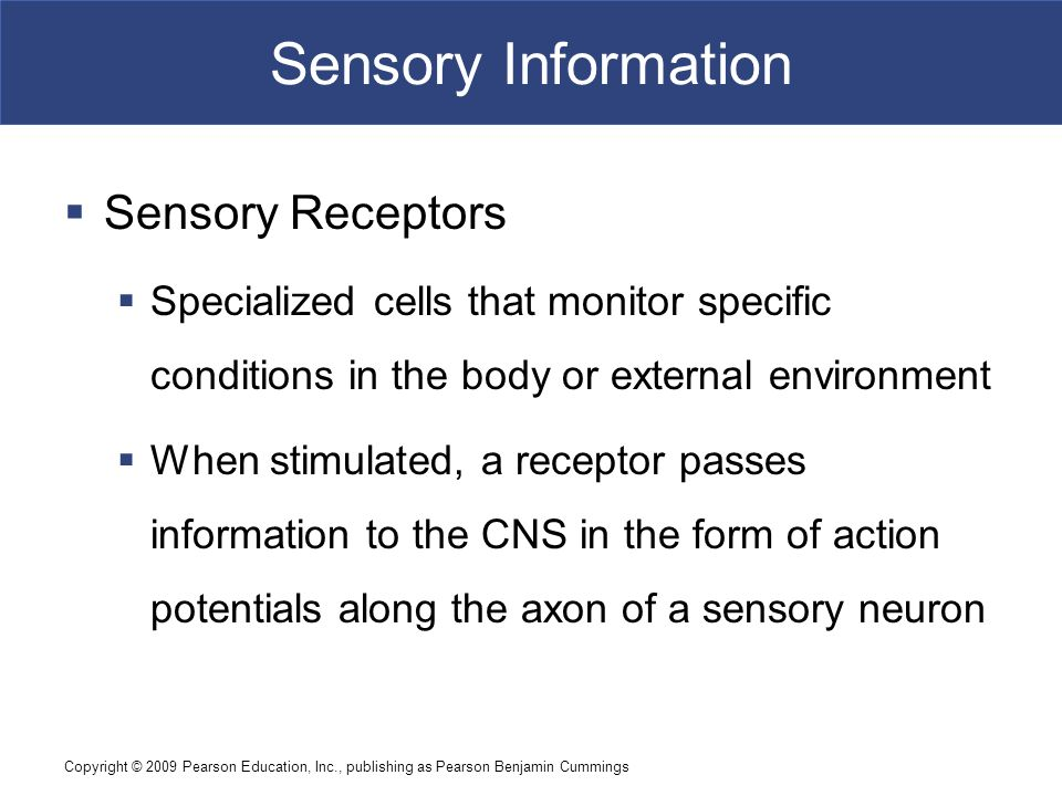 what are the functions of somatic receptors and sensory pathways