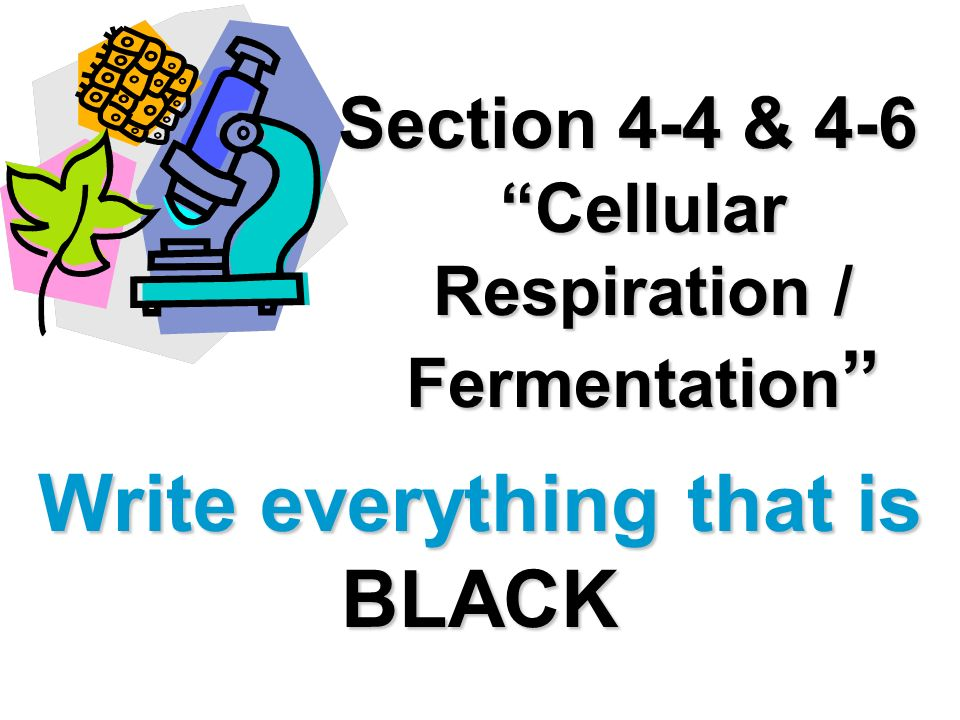 Section 4-4 & 4-6 Cellular Respiration / Fermentation