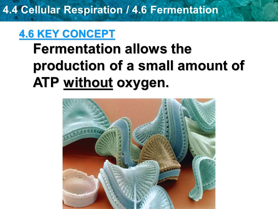 4.6 KEY CONCEPT Fermentation allows the production of a small amount of ATP without oxygen.