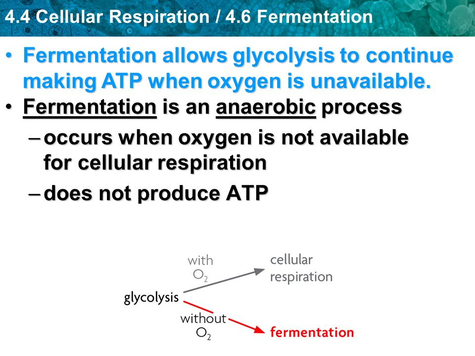 Fermentation allows glycolysis to continue making ATP when oxygen is unavailable.