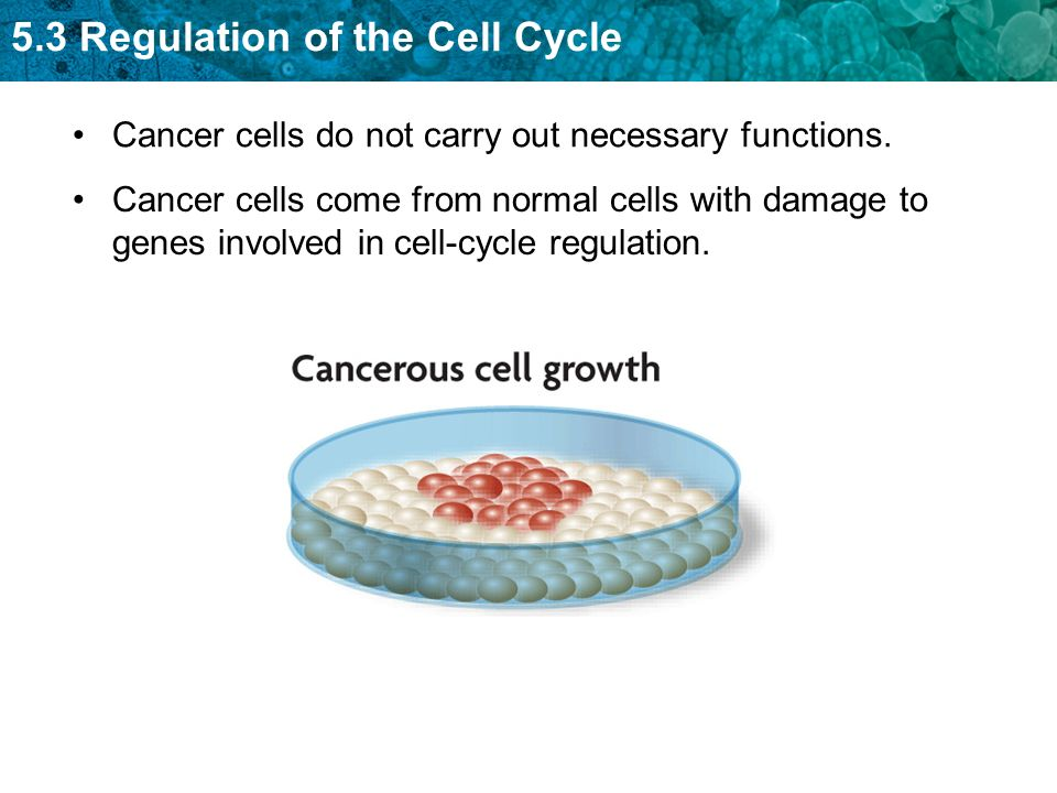 Cancer cells do not carry out necessary functions.
