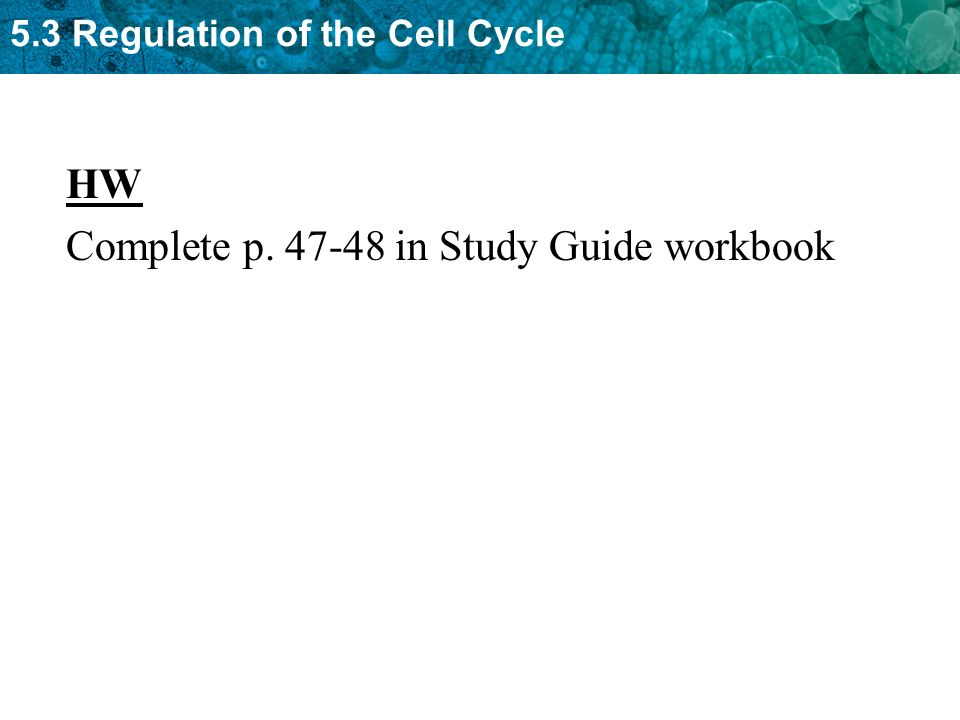 HW Complete p. 47-48 in Study Guide workbook