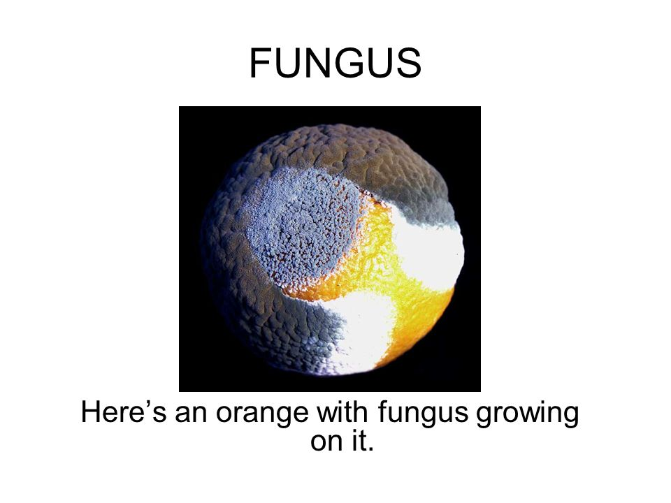 Here's an orange with fungus growing on it.