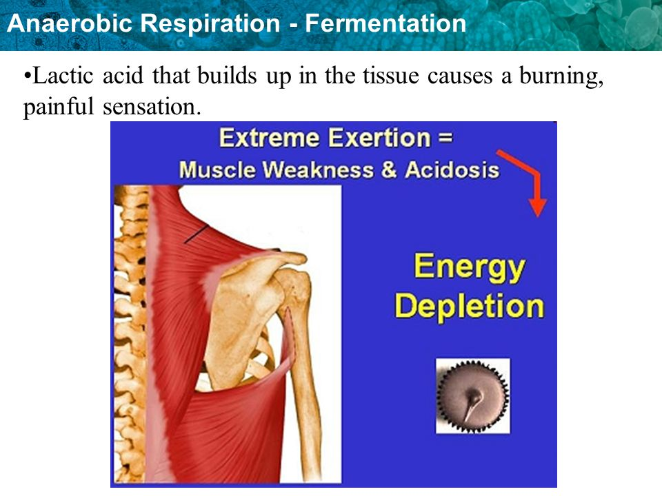 Lactic acid that builds up in the tissue causes a burning, painful sensation.