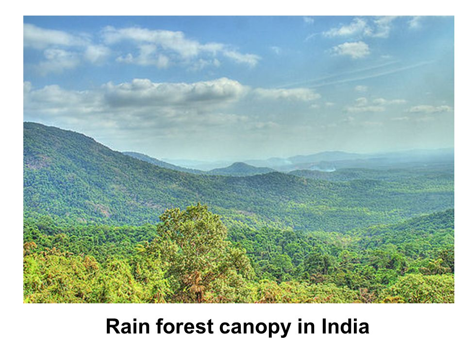 Rain forest canopy in India