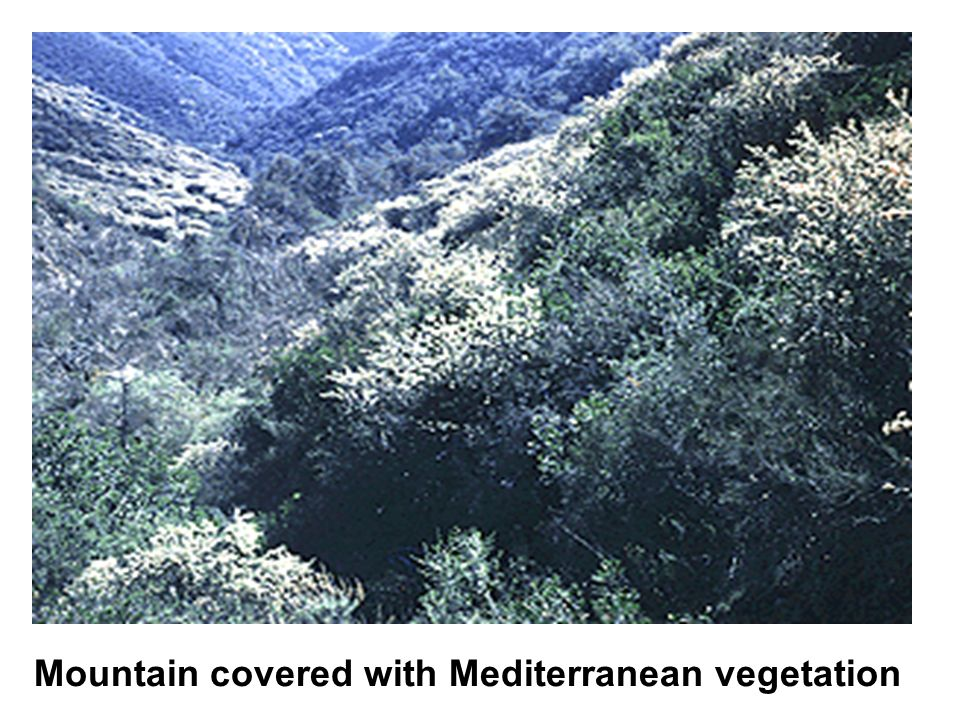 Mountain covered with Mediterranean vegetation