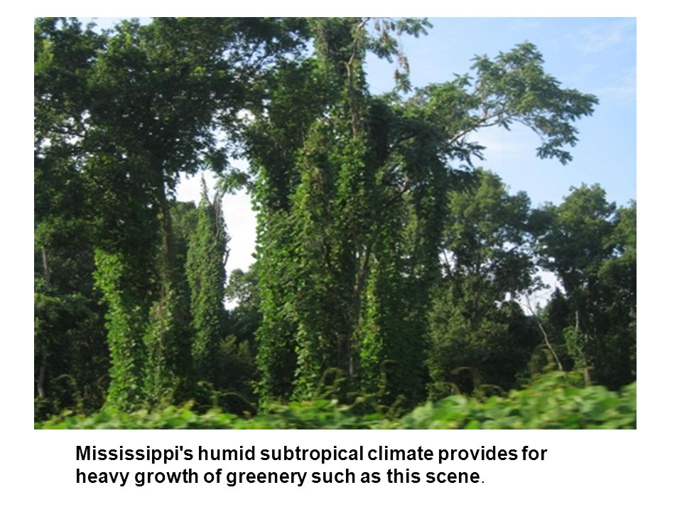Mississippi s humid subtropical climate provides for heavy growth of greenery such as this scene.