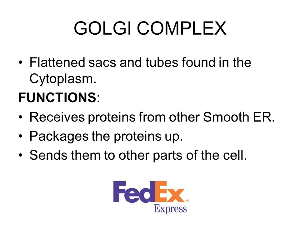 GOLGI COMPLEX Flattened sacs and tubes found in the Cytoplasm.