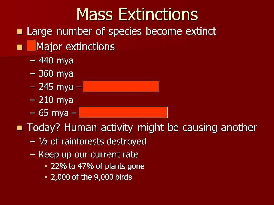 Mass Extinctions Large number of species become extinct