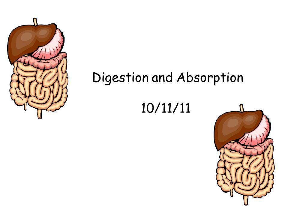Digestion and Absorption 10/11/11