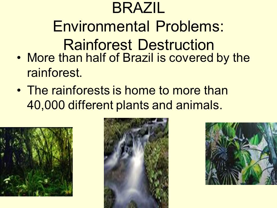 BRAZIL Environmental Problems: Rainforest Destruction