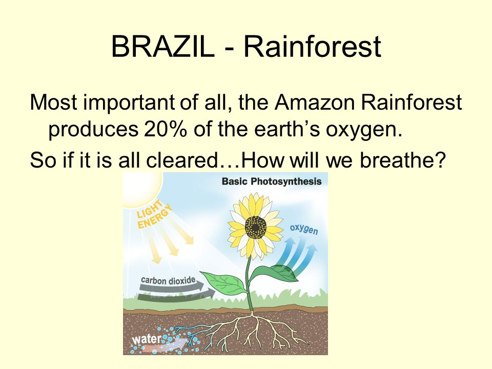 BRAZIL - Rainforest Most important of all, the Amazon Rainforest produces 20% of the earth's oxygen.