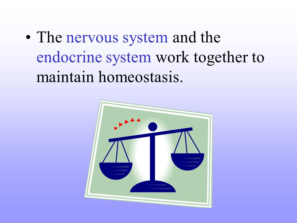 The nervous system and the endocrine system work together to maintain homeostasis.