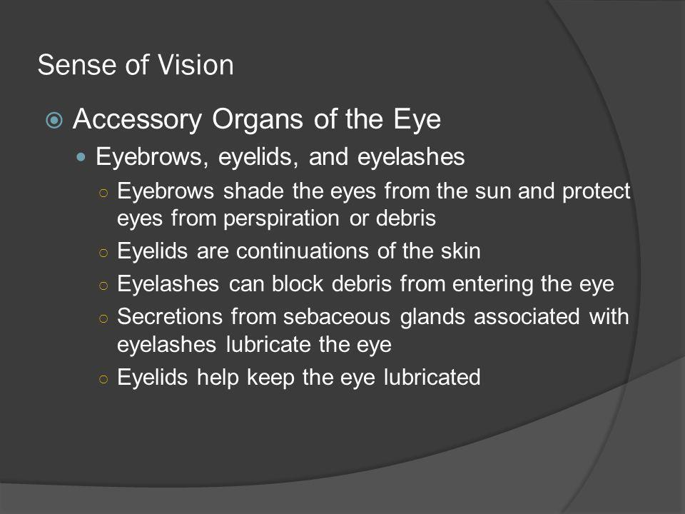 Sense of Vision Accessory Organs of the Eye